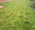 Vertikutace - správná péče o trávník